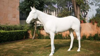 White Horse by Mark Wallinger in New Delhi